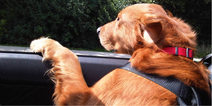 Tips for Car Travel with Dogs