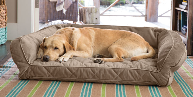 Choosing a New Dog Bed Liner or Cover