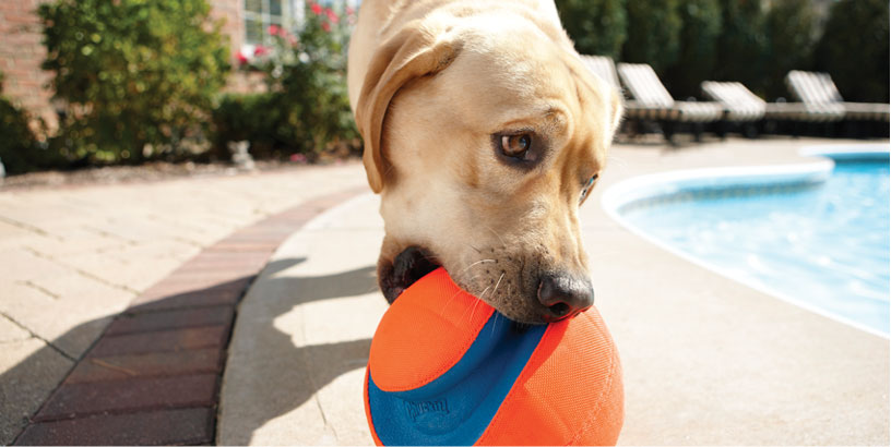 Play Safely with Your Dog