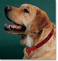 An Orvis Personalized Dog Collar