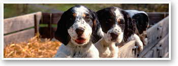 Orvis-Endorsed Gun Dog Breeders