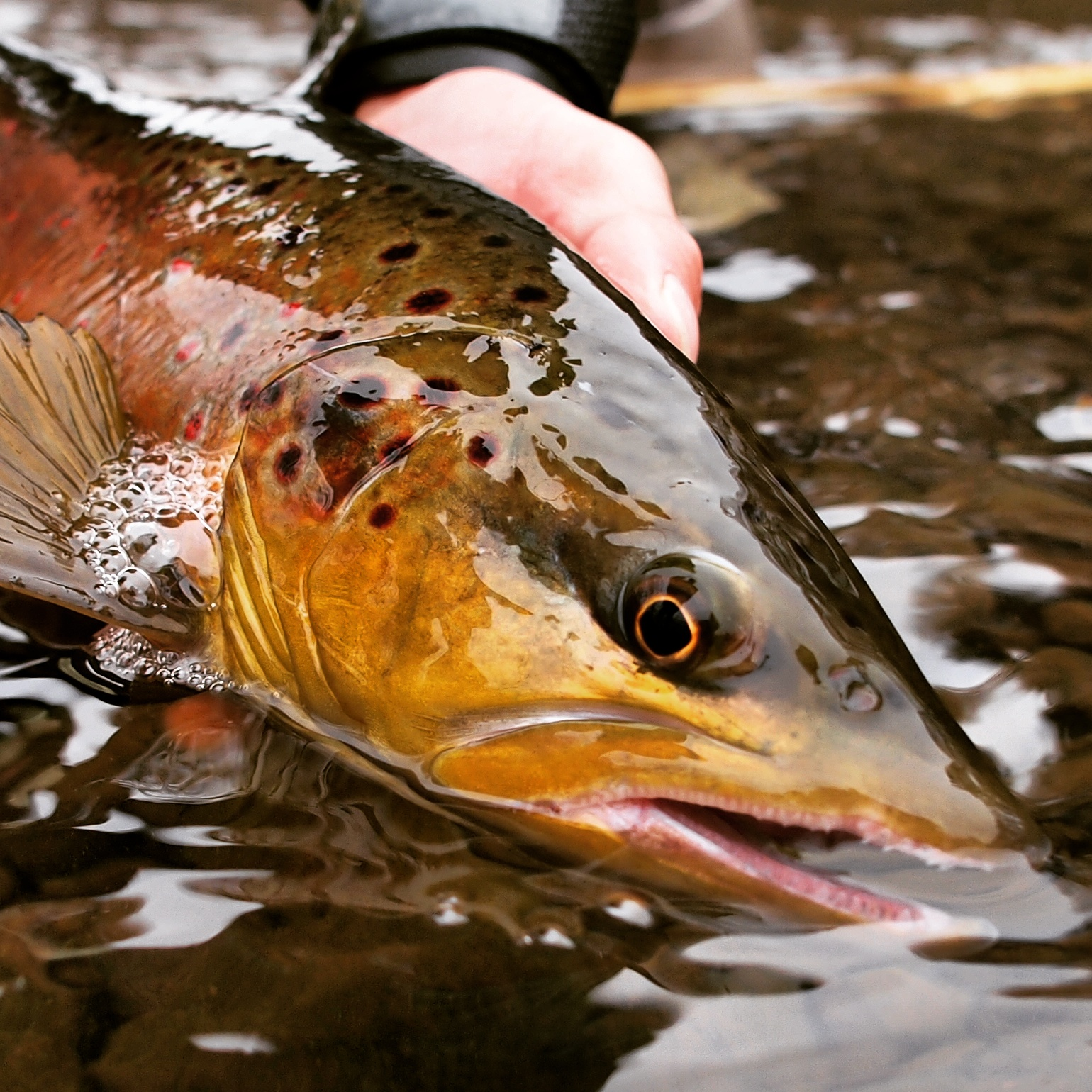 Rouse Fly Fishing