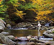 Fightmaster Fly Fishing