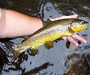 Savage River Angler