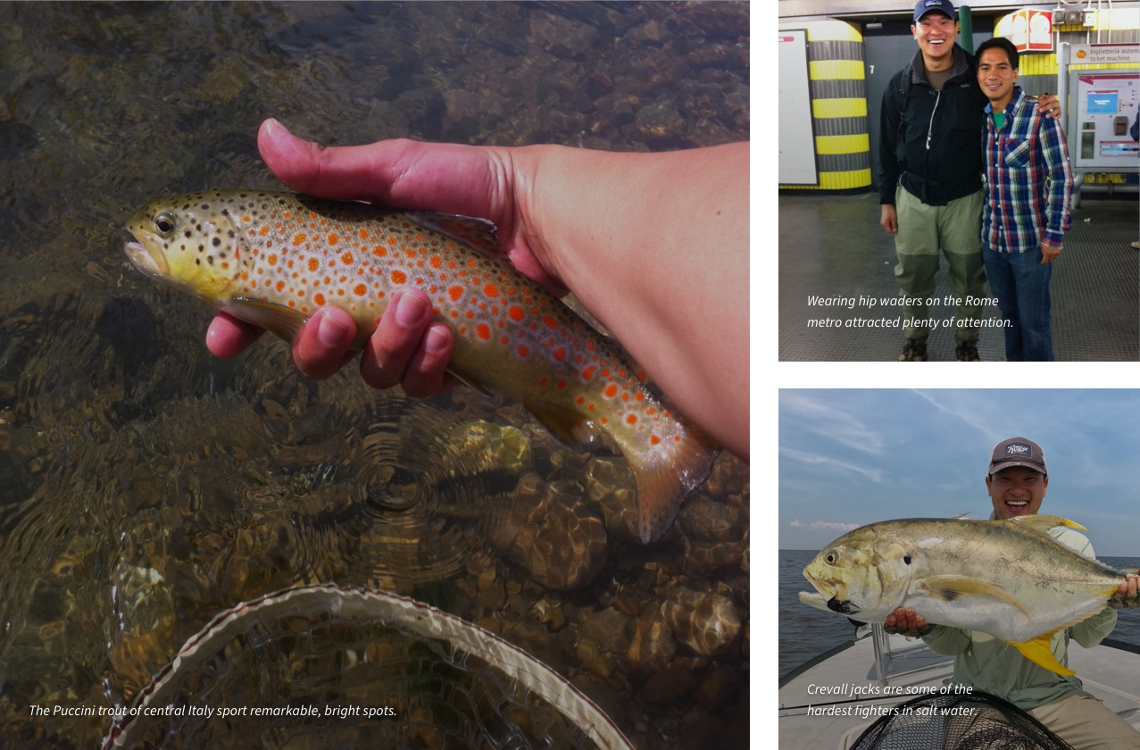 The Puccini trout  of central Italy sport remarkable, bright spots. | Wearing hip waders on the Rome metro attracted plenty of attention. | Crevall jacks are some of the hardest fighters in salt water.