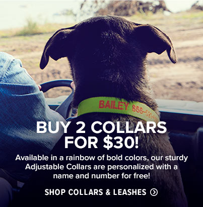 Shop Dog Collars and Leashes
