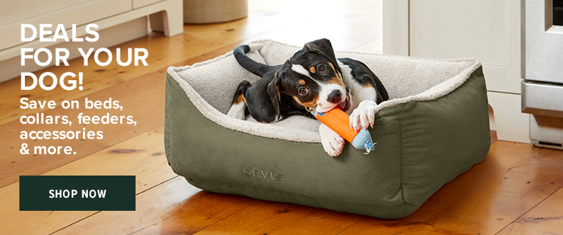 Deals for Your Dog - Shop Now