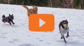 Orvis Working Dogs
