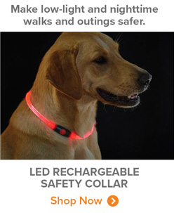Make low-light and nighttime walks and outings safer. | LED RECHARGEABLE SAFETY COLLAR Shop Now