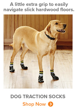 A little extra grip to easily navigate slick hardwood floors. | DOG TRACTION SOCKS Shop Now