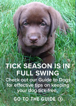 Tick Safety for Dogs