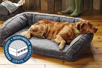 THE NEXT GENERATION OF CANINE COMFORT Treat your dog to an Orvis AirFoam dog bed, the most comfortable, most supportive, most responsive dog beds on the market. Shop Dog Beds