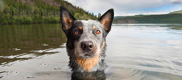 IS YOUR DOG THE NEXT ORVIS COVER DOG?  Get your dog on our catalog cover, win a $500 Gift Card, and help fund canine cancer research—all with a single photo.  Enter Now