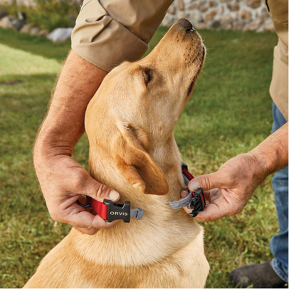 CONCEAL-A-COLLAR® PERSONALIZED FLEA AND TICK COLLAR