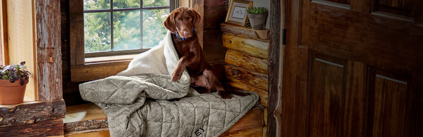 Dogs in the House - Dog Sofa Covers & Furniture Protectors