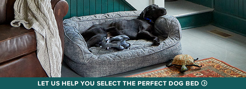 Let us help you select the perfect dog bed.