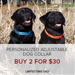 Personalized Dog Collars | Buy 2 for $30 | Limited Time Only