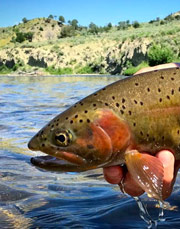 ORVIS WEEK AT HUBBARD'S YELLOWSTONE LODGE