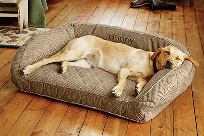 EVERY DOG NEEDS A DEN Our bolster bed respects your dog's natural denning instincts by providing a cozy sense of security. Shop Dog Beds