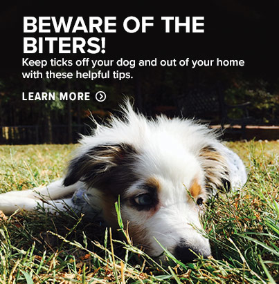 BEWARE OF THE BITERS!  Keep ticks off your dog and out of your home with these helpful tips.  Learn More