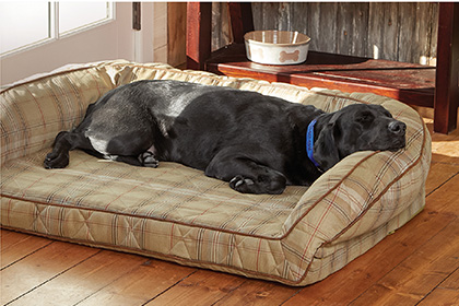 SAVE UP TO 20% ON SELECT DOG BEDS