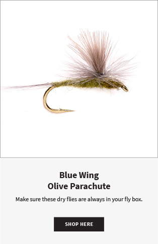 Blue Wing Olive Parachute Make sure these dry flies are always in your fly box. |  Shop Now
