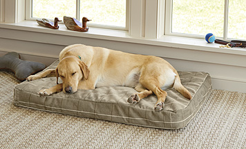 We created a rugged ToughChew Memory Foam Dog Bed for chewers who prefer a platform.