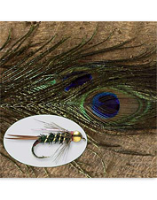 Peacock feathers are a key ingredient in fly tying streamers, dries, nymphs, and wet flies.