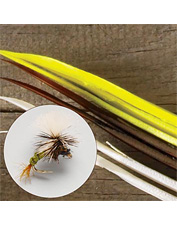 Tying flies for picky fish demands bodies tied with biots. Made in USA.