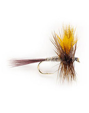 Use a dark Hendrickson fly as an attracter to catch hungry fish.