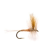 This is one of the better flies that gets the light Hendrickson mayfly color just right.