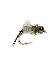This emerging nymph will soon be a favorite fly pattern.