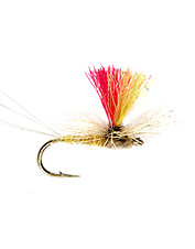 Spring sulphurs are common Eastern fly fishing flies.