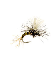 This midge fly pattern can be used as a dry fly or emerger.