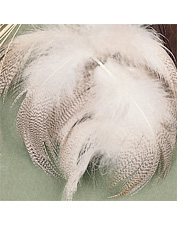 Mallard feathers are perfect for tying wings on a classic dry fly pattern.