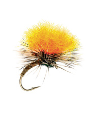 This emerging caddis will soon be a favorite fly pattern.