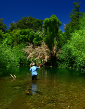 Join an Orvis-hosted fly-fishing trip to Argentina's Los Alerces National Park.