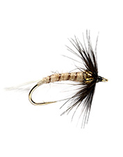 Cast it, swing it, and be ready to catch fish with this wet fly pattern.