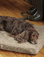 Show your dog how much you care with our Dream Lounger.