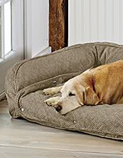 Our Memory Foam Bolster Dog Bed with snap-off pads is ideal for a senior or incontinent pet.