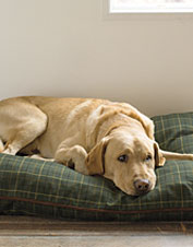Your dog may not care about the stylish plaid on his pillow bed, but he'll love its comfort.