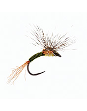 When only a perfect presentation will do, this emerger pattern gets it done.