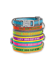 This padded dog collar with coordinating leash can be personalized with vital information.