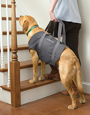 Use this sling to lift your senior or injured dog and to help him with stairs and mobility.