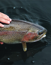 Orvis-Endorsed Fly-Fishing Lodge in Cascade, Montana