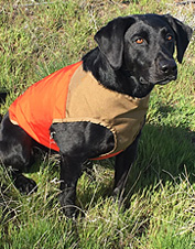 Protect your companion from outdoor hazards with the rugged, adjustable CUGA dog vest.