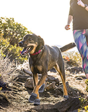 Keep your roving canine's paws protected on the go with Summit Trex dog boots by Ruffwear.