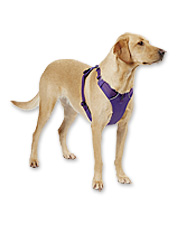 Your furry best friend will be ready for anything in this Everyday Adventure Dog Harness.