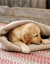 Puppies and adult dogs have a mutual appreciation for this soft, cozy Burrower Blanket.