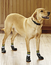 Give your dog a bit of traction or protect his paws from winter walkways with no-slip socks.